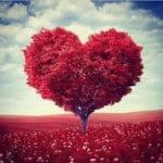 CHỈ CÓ TRÁI TIM YÊU THƯƠNG MỚI GIEO MẦM HẠNH PHÚC