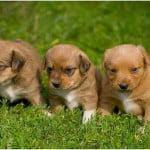 Bài văn tả con vật mà em yêu quý – Tả con chó