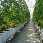 Bài 8: Vấn đề phát triển và phân bố Nông nghiệp
