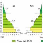 Bài 5: Thực hành phân tích và so sánh tháp dân số năm 1989 và 1999