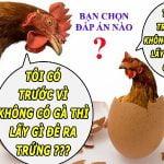 Trứng gà có trước hay gà có trước